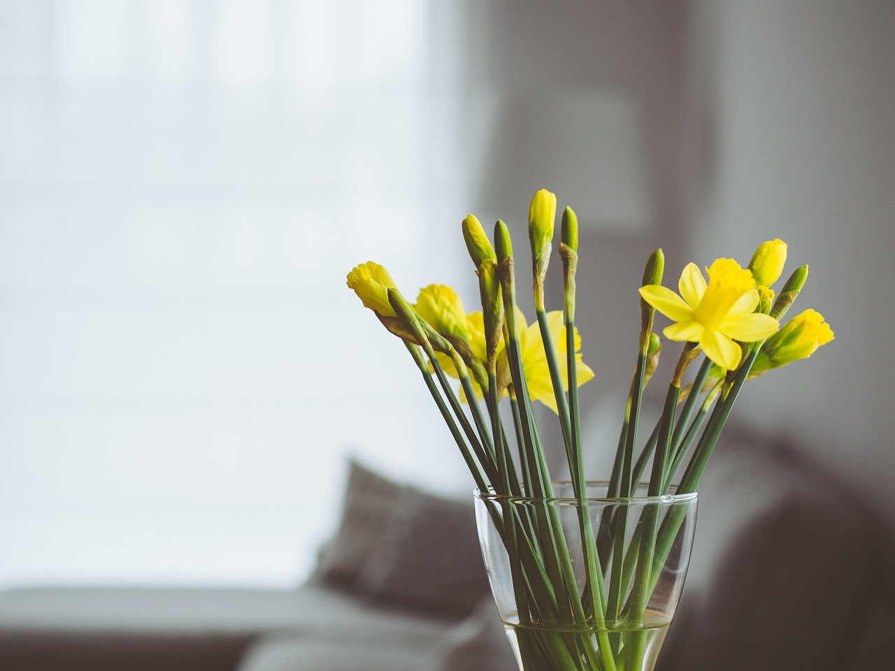 flowers-819361_1280