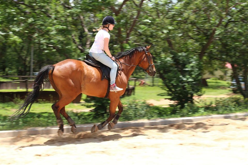 horses-816793_960_720