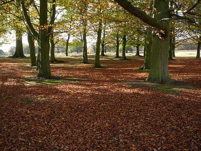640px-Richmond_Park_understorey